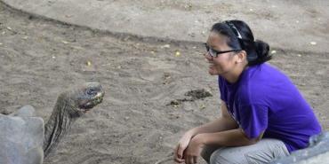 Volunteer with giant Galapagos tortoise