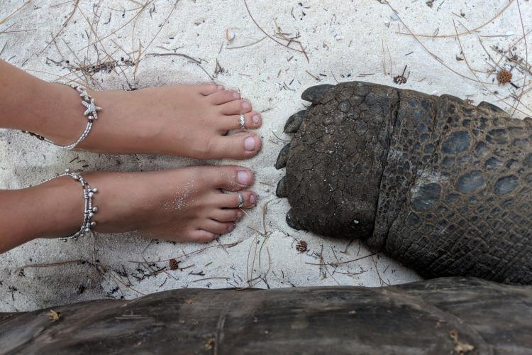 Giant tortoise foot