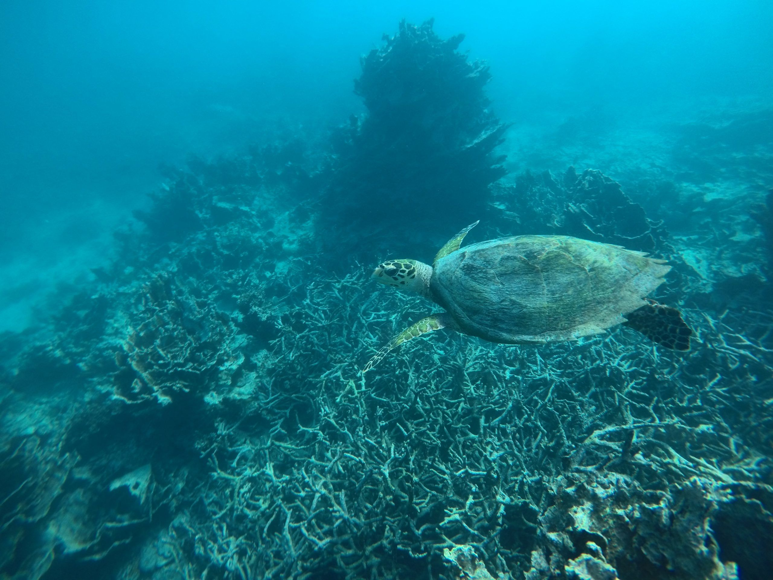 alttagCoral Reef Marine Conservation | Volunteer Mauritius | Working Abroad