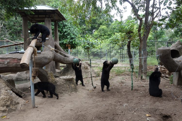 Group of bears in enclosure
