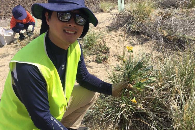 Conservation volunteer pulling weeds