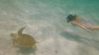 Intern swimming with turtle in Tobago Cays