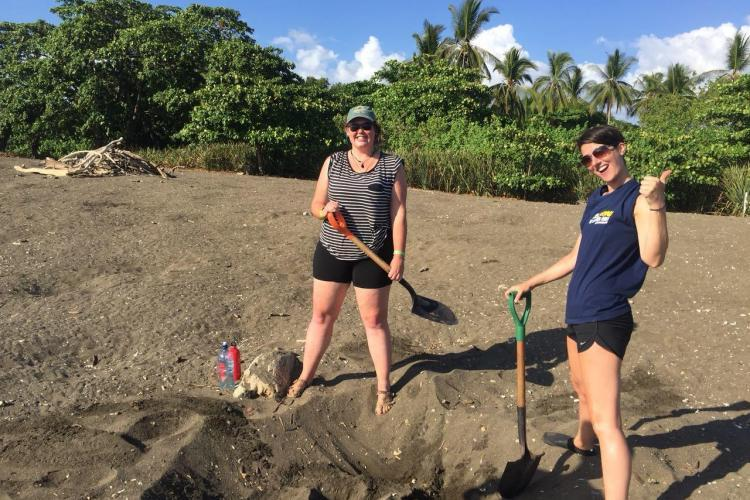 Volunteers excavating turtle nests in Costa Rica