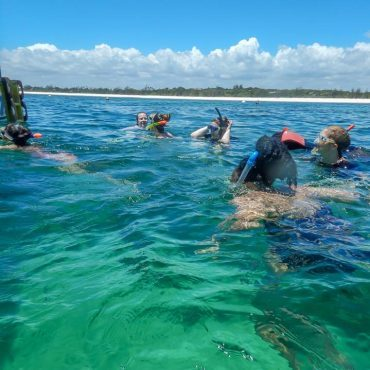 Turtle conservation volunteers snorkelling