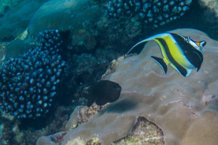 Marine life research in Mauritius