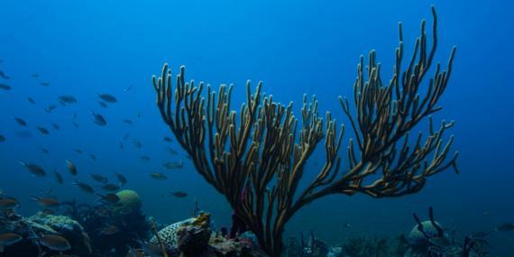 Marine Scenery in Carriacou