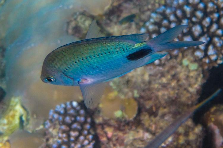 Fish research in Mauritius