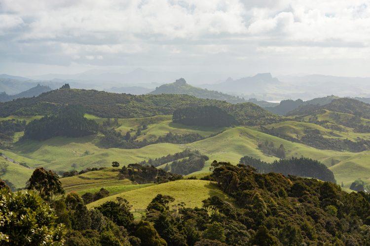 Northland Landscape, New Zealand