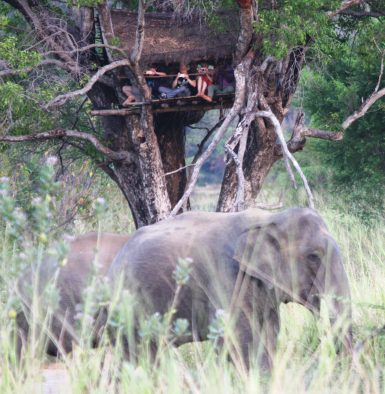 Observing elephants from tree hut