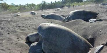 alttagCosta Rica conservation | Sea turtle volunteer | Working Abroad