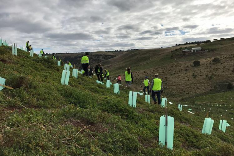 Tree planting volunteers in New Zealand