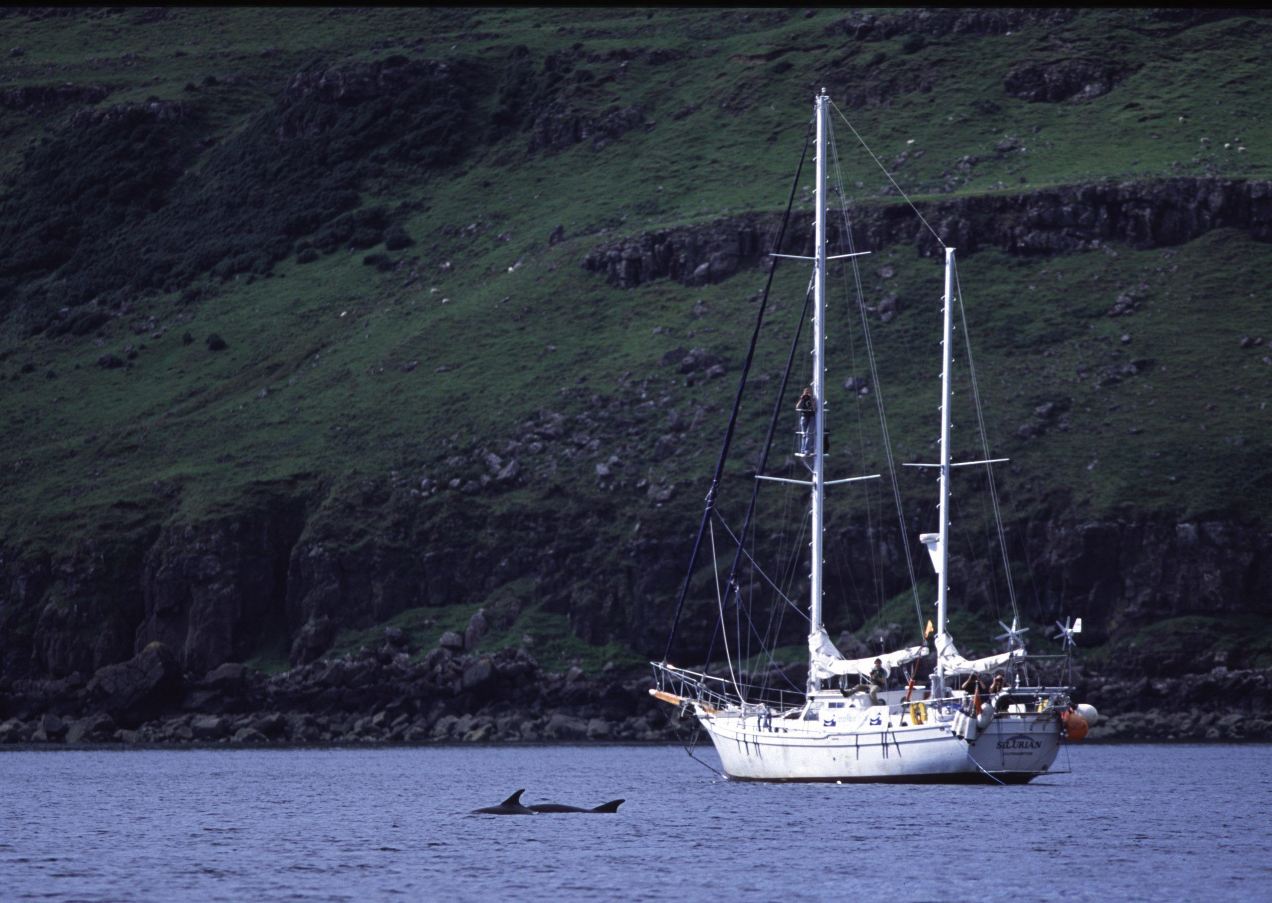 Research boat and bottlenose dolphins