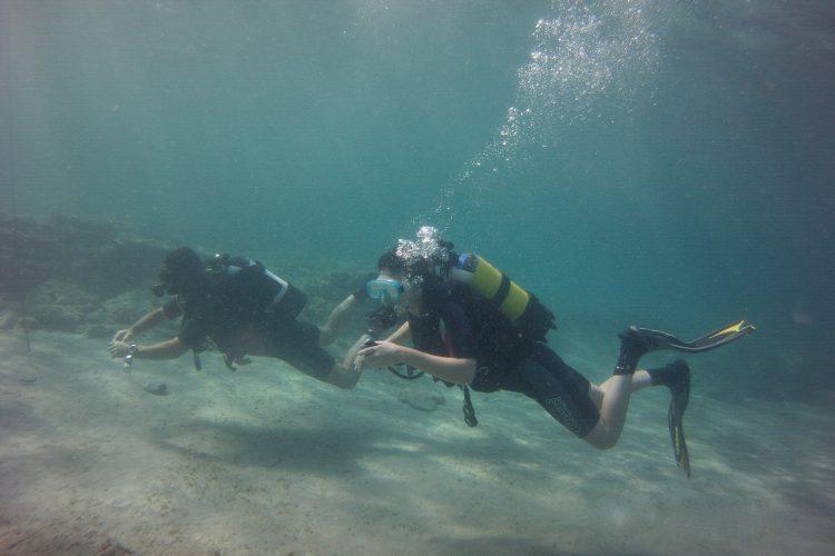 Scuba diving conservation volunteer in Spain