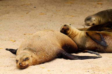Sea lions on the beach in Galapagos islands