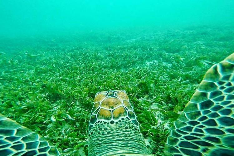 Sea Turtle swimming underwater in Kenya