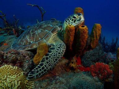 alttagConservation Volunteering | St Eustatius Caribbean | Working Abroad