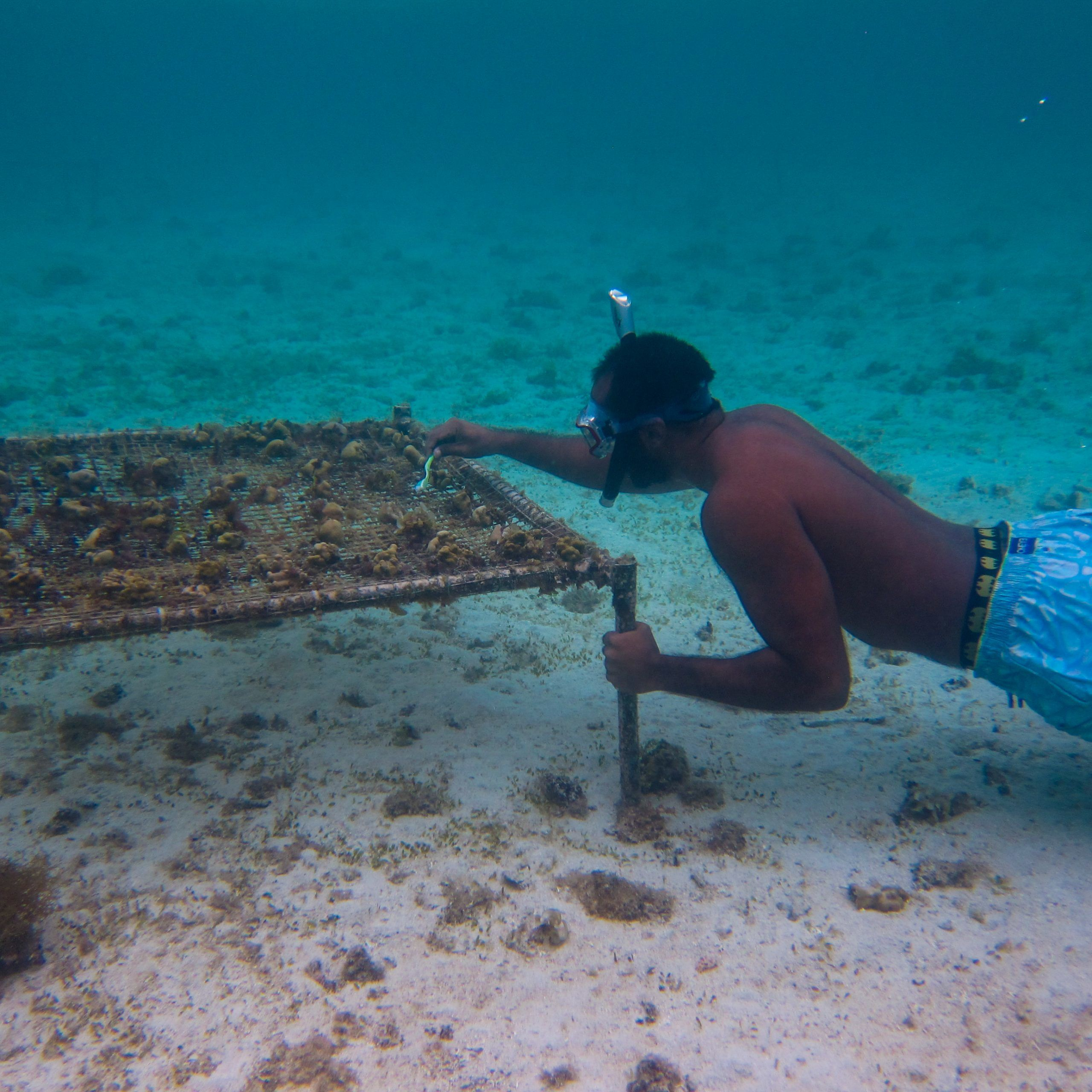 Coral Farming Intern, Mauritius