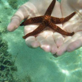 Starfish in Mauritius