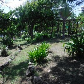 Botanical garden on Statia
