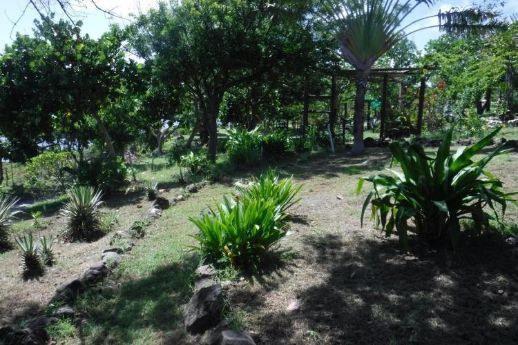 Botanical garden on Statia