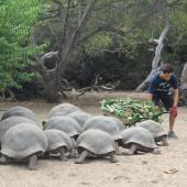 Giant Tortoise Conservation Volunteer, Galapagos