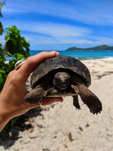 tortoise cousin island