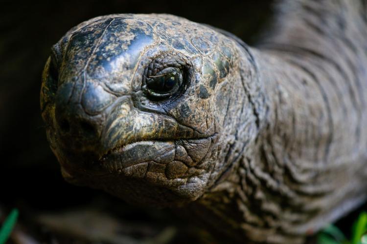 Wildlife conservation in Mauritius Giant Tortoise
