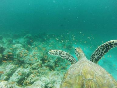 Turtle swimming underwater in Maldives
