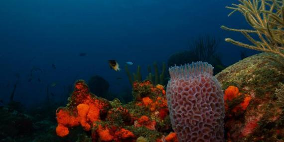 Coral in St Eustatius
