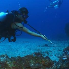 Volunteer catching lionfish in St Eustatius