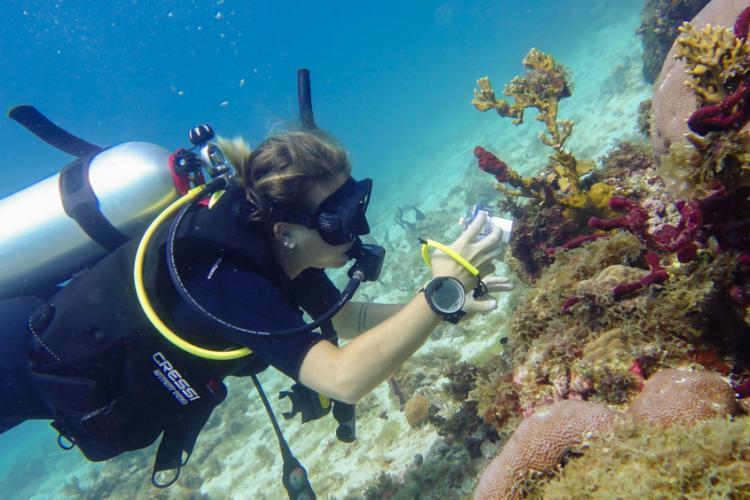 Volunteer researching corals