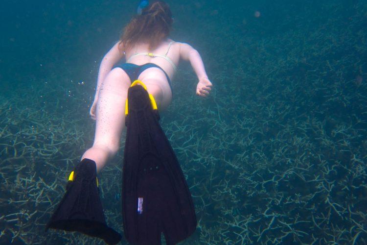 Volunteer snorkelling in the lagoon