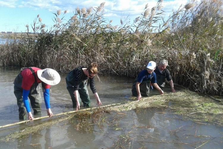 Conservation Volunteers in Albufera Park