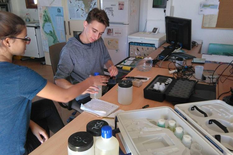 Conservation volunteers analysing data in lab in Valencia