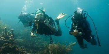 Volunteers diving in Carriacou