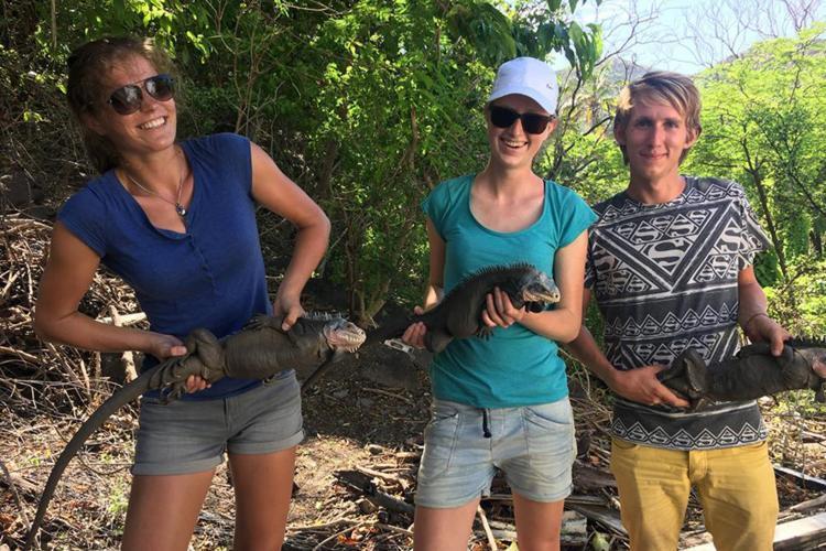 Volunteers holding Iguanas in St Eustatius