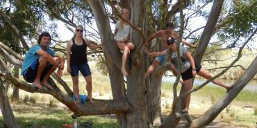 Volunteers climbing a tree