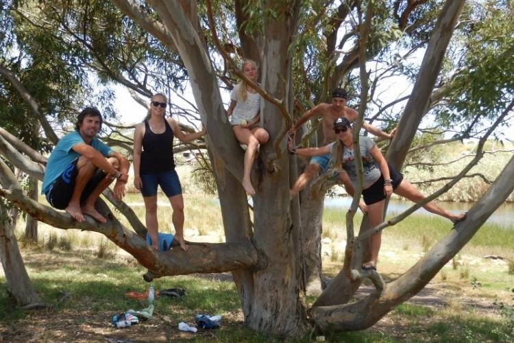 Volunteers climbing a tree