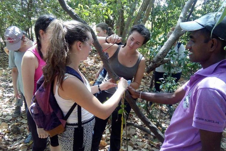 Volunteers marking trees