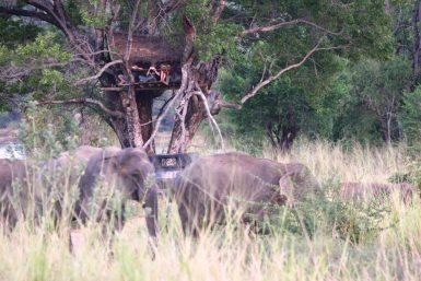 Volunteers observing elephants from tree hut
