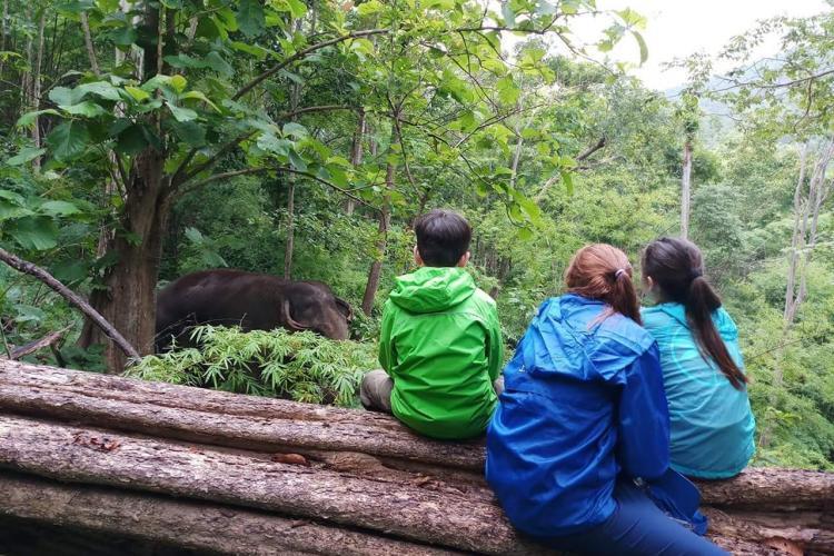Volunteers observing elephants Thailand