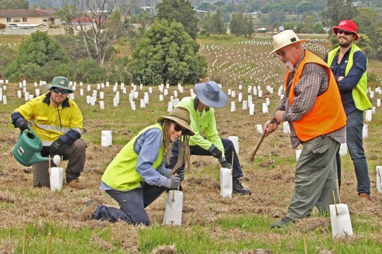 Volunteers planting trees in Australia