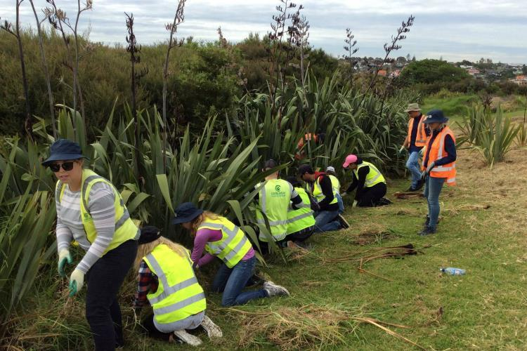 Volunteers pulling weeds in New Zealand