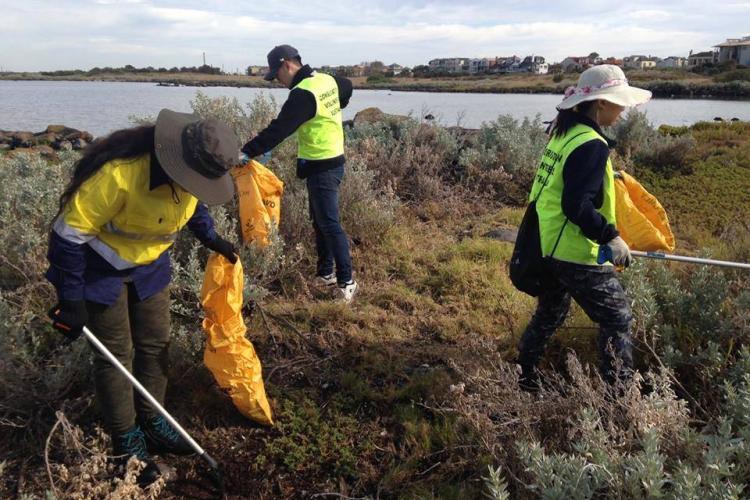Volunteers weeding in New Zealand