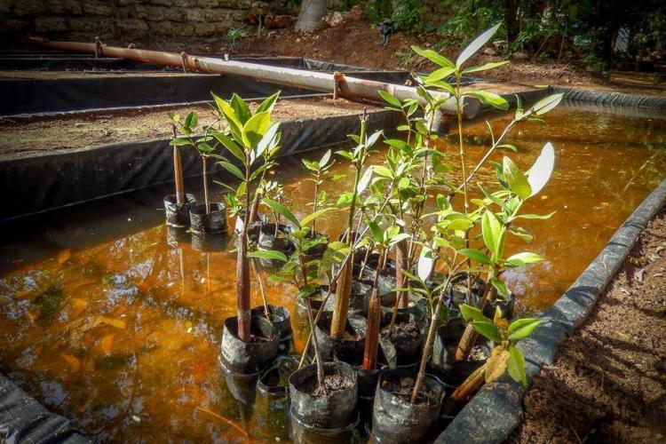 Tree saplings growing in water