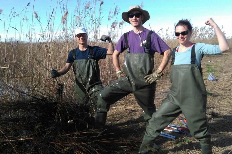 Wetlands conservation volunteers in Spain
