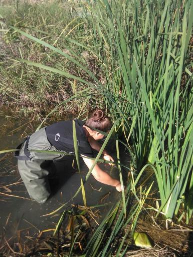 Volunteer doing wetlands conservation project in Valencia