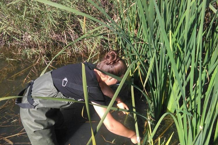 Volunteer doing wetlands conservation project in Valencia