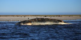 Dead whale in Namibia