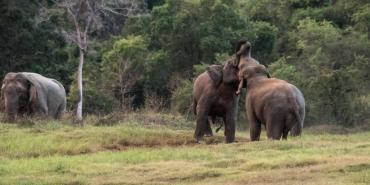 About Elephant Conservation